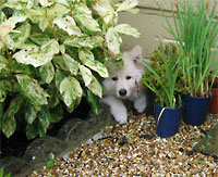 dog in hiding plants