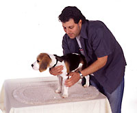 Man holding dog on table