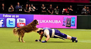 'KIM AND TYLER COMPETING AT CRUFTS 2015'