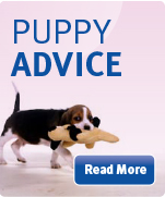 puppy advice