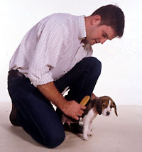 man brushing puppy