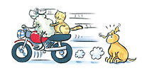 Dog and cat on motor bike