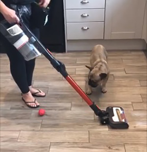 Hoover puppy